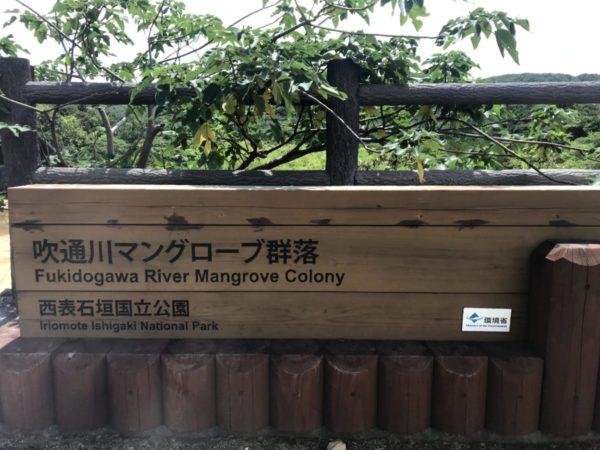 【吹通川(ふきどうがわ)】石垣島でもお手軽にマングローブ林を堪能できる