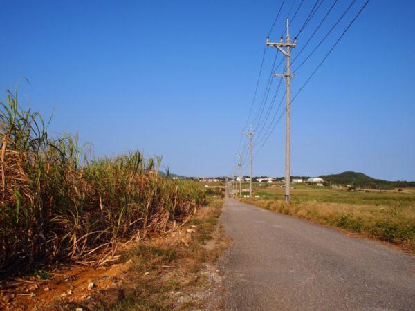 小浜島は沖縄が満載!子連れ旅ではゆっくり滞在しての観光がおすすめ