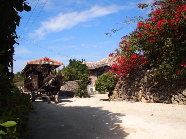 個人でめぐる【竹富島】お手軽に楽しる沖縄離島で子連れ旅に最適